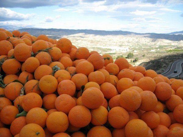 Pomaranče Slnko Španielsko