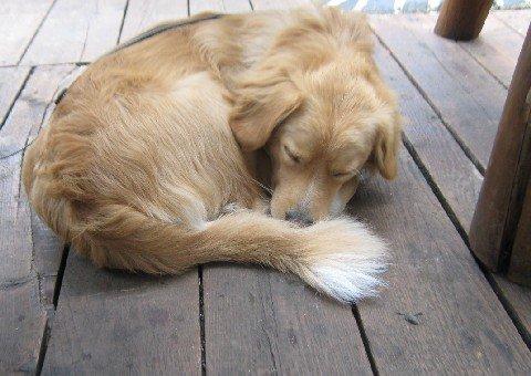 Venčiť psa_Lexika