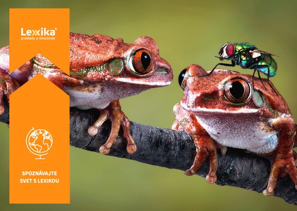 Žaba pozerajúca sa na druhú žabu s muchou na hlave