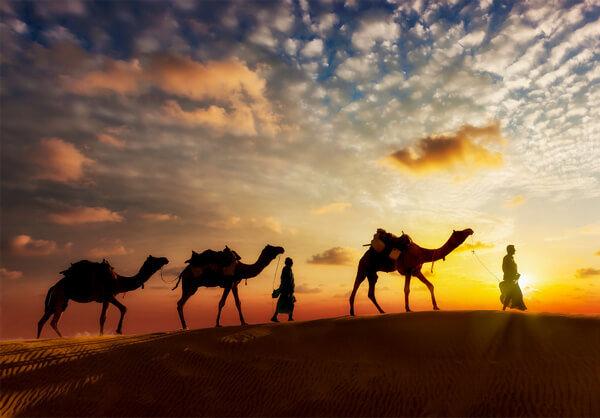 Ťavy na púšti pri západe slnka