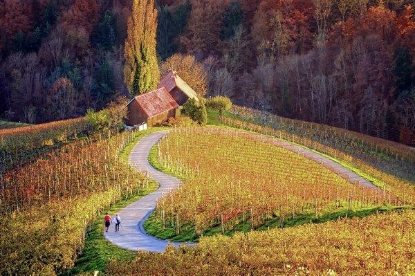 cesta v tvare srdca, vinice v Maribore