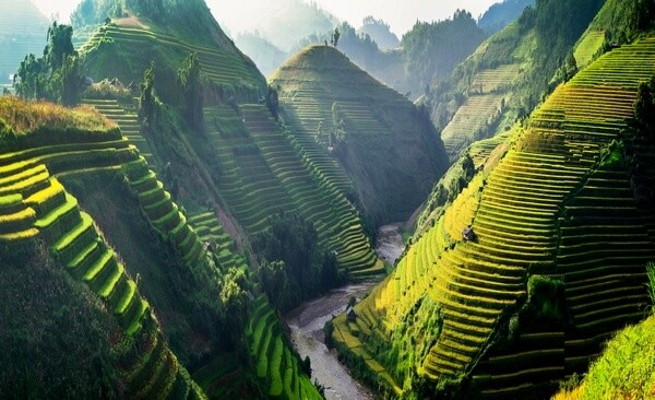 Kopce ryžových polí
